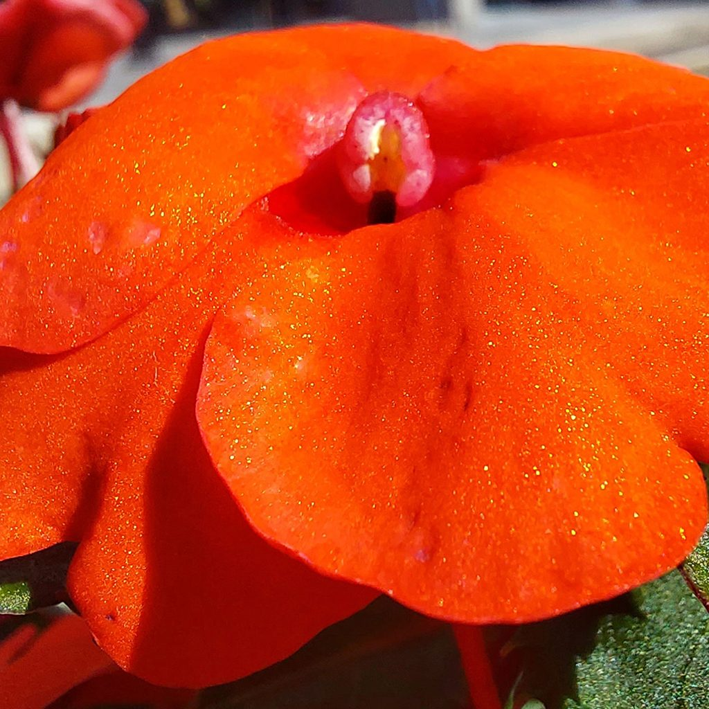 Фото цветка Galaxy A52 5G